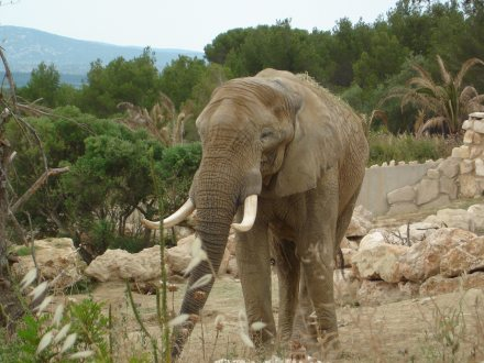Aude Cathare Reserve Africaine Sigean